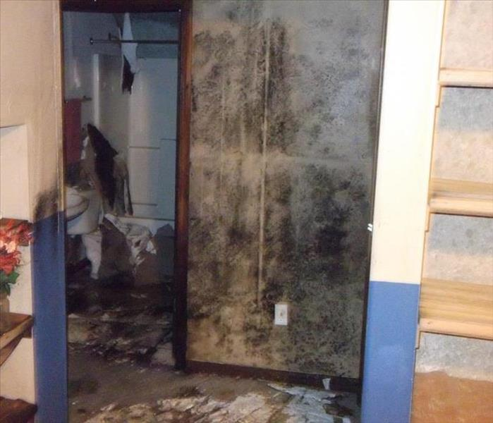 Mold Remediation Home...Er, Mold Invasion
